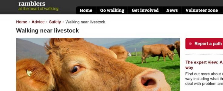 walking near livestock - the Ramblers advice on how to keep safe near cattle